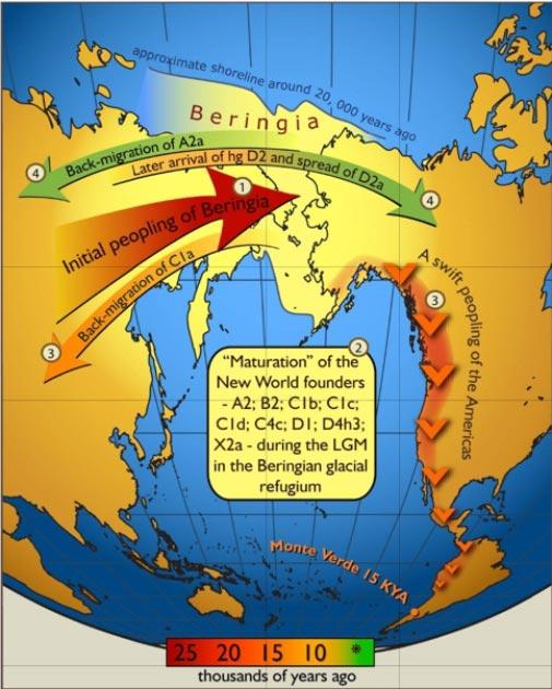 Mapa de 2007 del flujo de genes dentro y fuera de Beringia, según los haplogrupos de ADN mitocondrial humano. Los colores de las flechas corresponden al tiempo aproximado de los eventos y se decodifican en la barra de tiempo coloreada. (Imagen: PLoS One / CC BY 2.5)