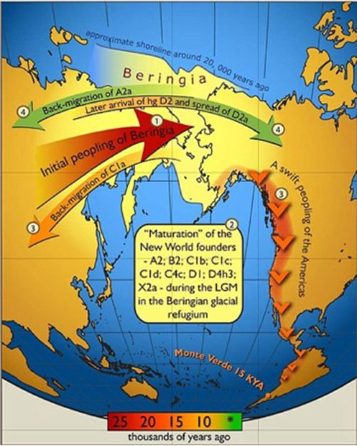 Mapa del flujo genético en ambas direcciones a través de Beringia, según datos del año 2007 basados en haplogrupos del ADN mitocondrial. Los colores de las flechas corresponden a la época aproximada de los acontecimientos y su clave se puede encontrar en la barra cronológica de colores. (Erika Tamm et al/ CC BY 2.5 )