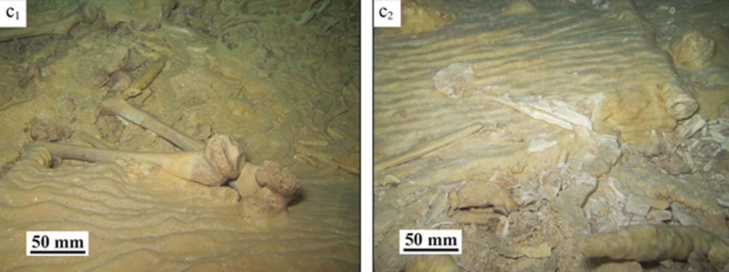 Antes y después del saqueo en la cueva mexicana en la que se realizó el descubrimiento. (Stinnesbeck y colaboradores) Apenas el 10% del esqueleto quedó en el lugar, incluyendo la pelvis cubierta por la estalagmita