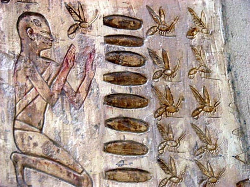 Una de las más antiguas imágenes conocidas relacionadas con la apicultura fue descubierta en el templo del sol erigido en torno al 2400 a. C. cerca de El Cairo. (aloelf.com)