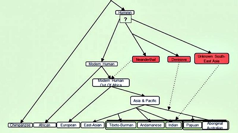 Esquema de cómo quedaría el nuevo árbol evolutivo del ser humano moderno tras el hallazgo de la nueva especie. (Mayukh Mondal/EFE-Futuro)