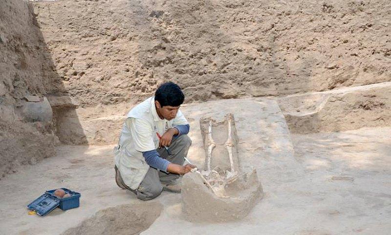Arqueólogo estudiando uno de los esqueletos femeninos descubiertos en la Huaca Santa Rosa de Pucalá. (Chiclayoenlinea.com/Andina)