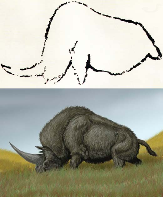 Arriba: Arte rupestre de Rouffignac, Francia, en el que se observa un animal que se cree que podría ser el extinto Elasmotherium. (Public Domain) Abajo: Elasmotherium sibiricum. (DiBgd/CC BY SA 3.0)