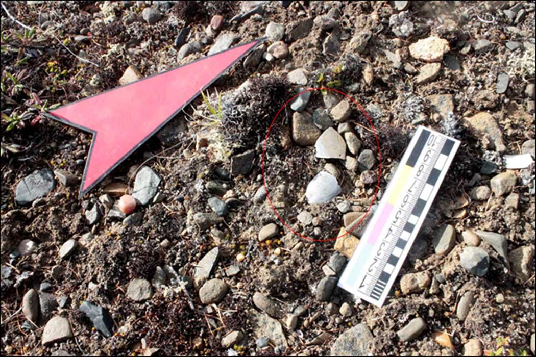 Los bezotes y puntas de flecha neolíticos descubiertos recientemente se encontraban a la vista sobre el terreno.