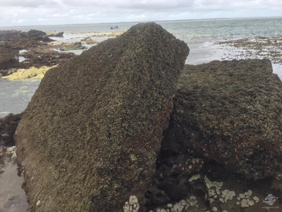 Fotografías de algunos de los bloques de piedra cuadrados y rectangulares hallados en las costas de la isla de Mafia, perteneciente a Tanzania. (Seaunseen / Alan Sutton)