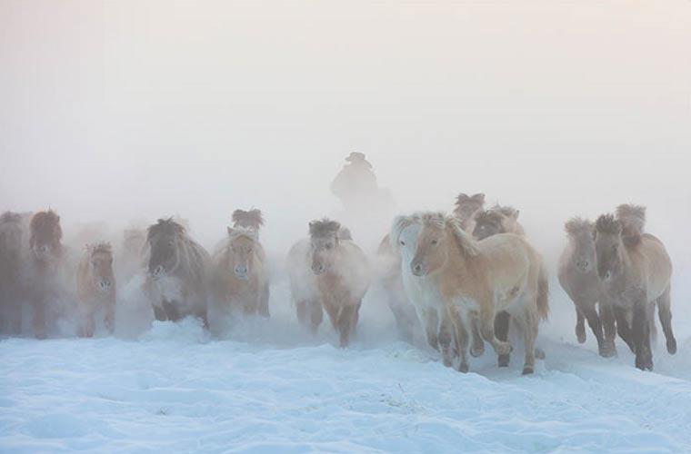 Caballos-Yakutos-Nieve