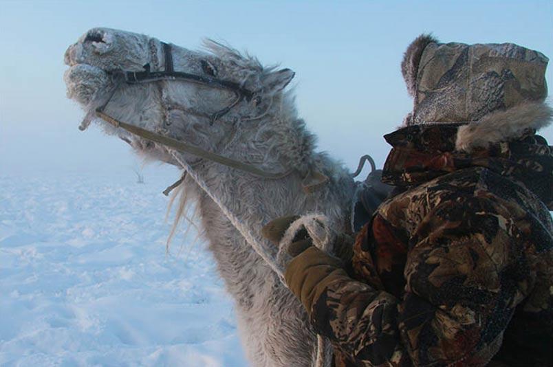 Caballos-yakutos-nieve2.jpg