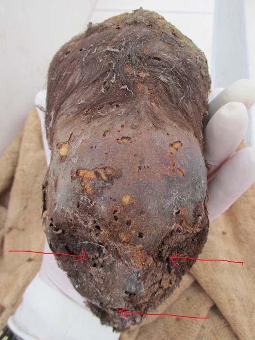 La cabeza elongada momificada de un recién nacido hallada recientemente en Perú. Las flechas señalan las fosas oculares y la boca. (Brien Foerster / Hidden Inca Tours)
