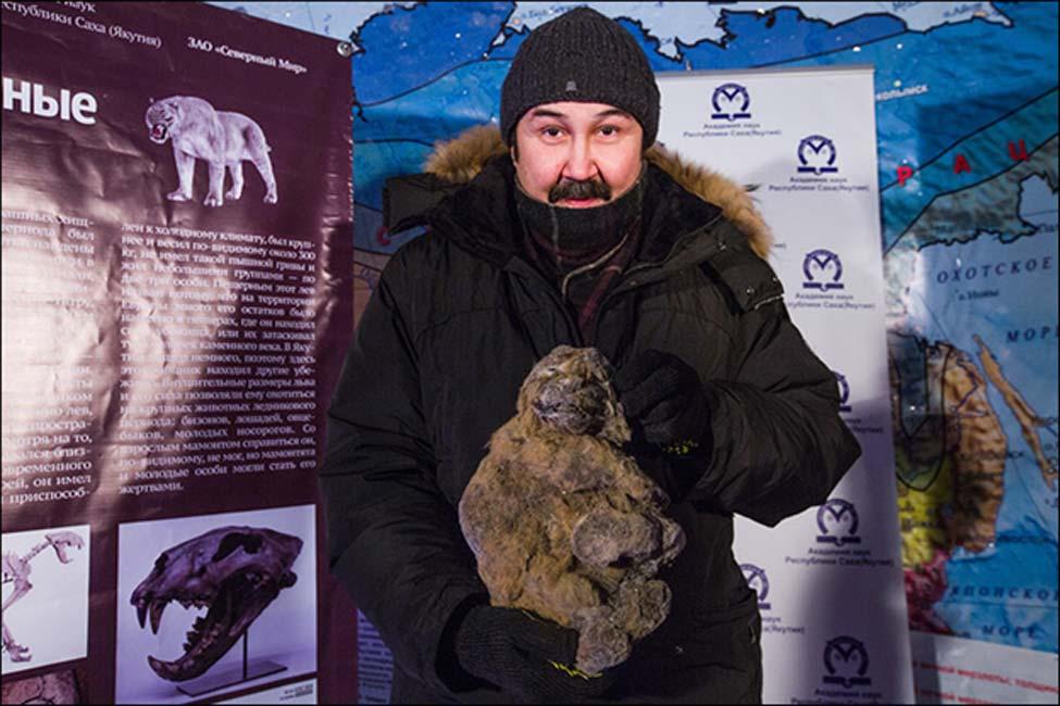 Los cachorros fueron descubiertos en el distrito de Abyisky, en las márgenes del río Uyandina, a unos 57 kilómetros de la población de Belaya Gora. Fotografías: The Siberian Times, Vera Salnitskaya