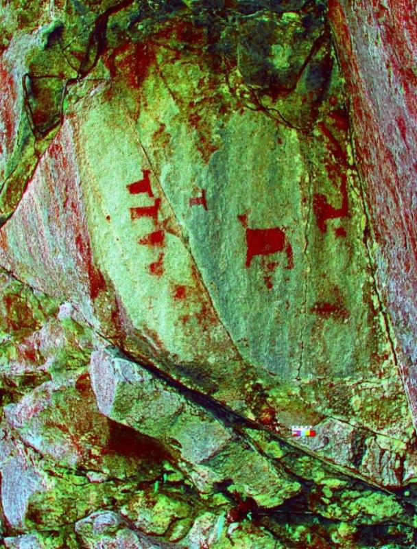 Imagen tratada digitalmente en la que aparecen representados camélidos andinos de cuerpo rectangular. (Fotografía: Fernando Astete/National Geographic)