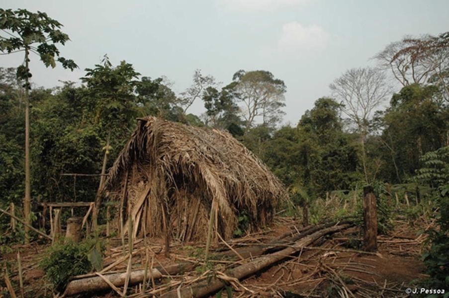 """La casa y el jardín del """"Último de su tribu"""". Crédito: J. Pessoa, Survival International"""