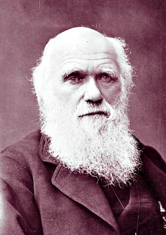 Fotografía de Charles Darwin tomada en 1881 por Herbert Rose Barraud (1845-1896). Está considerada la última fotografía de Darwin antes de su muerte. La original se encuentra en la Biblioteca Huntington. (Public Domain)