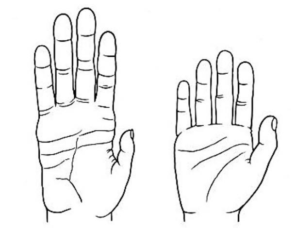 Manos de un chimpancé, a la izquierda y humana, a la derecha (Wikimedia Commons)