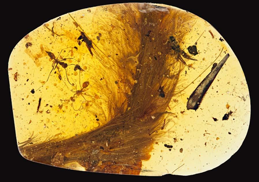 Bloque de ámbar con la cola cubierta de plumas de un dinosaurio bebé encerrada en su interior. Su antigüedad es de 99 millones de años. Ryan McKellar/Museo Real de Saskatchewan