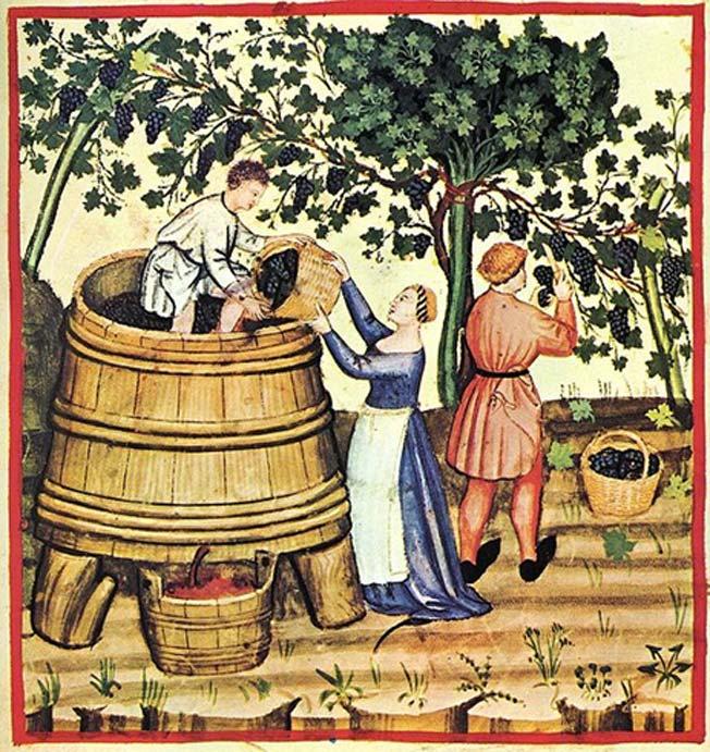 Cosecha y producción de vino en el siglo XIV. (Dominio público)