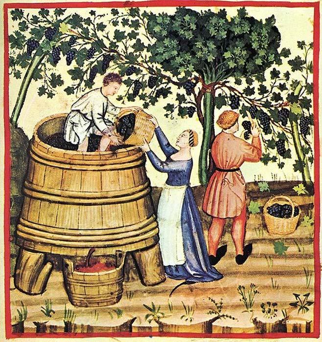 Cosecha de uvas para elaborar vino. (Dominio público)