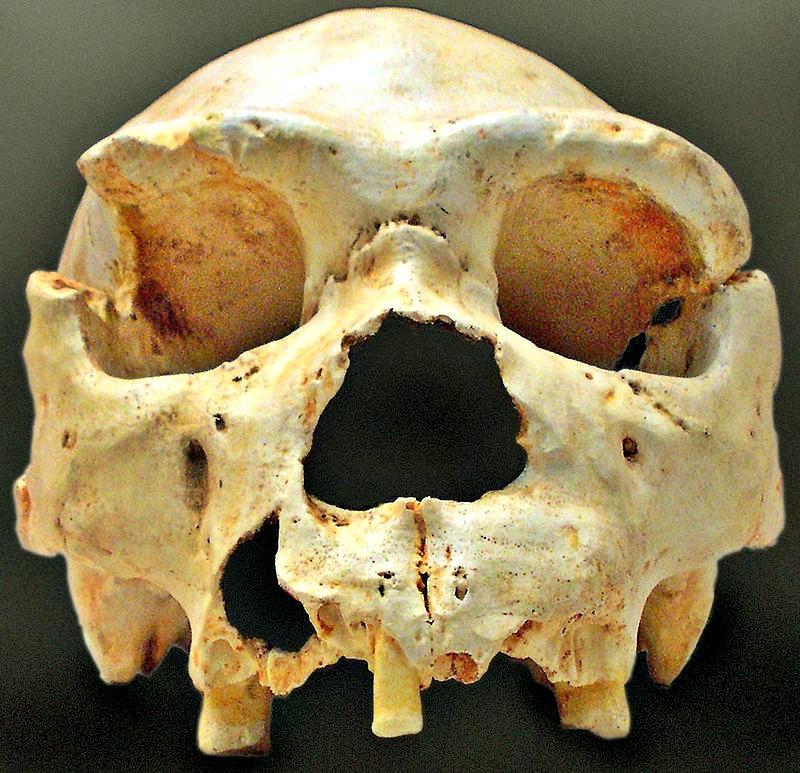 Cráneo número 5 de la Sima de los Huesos de Atapuerca, tal y como fue descubierto en la campaña de 1992. La mandíbula de este cráneo apareció, casi intacta, años después, muy cerca del lugar del hallazgo inicial. (José-Manuel Benito Álvarez/CC-BY-SA 2.5)