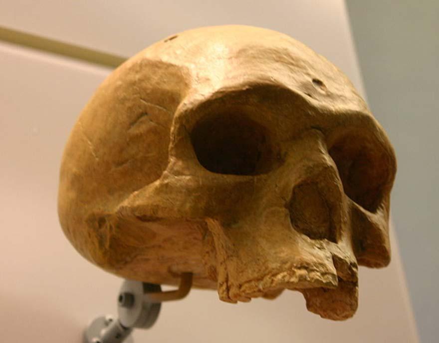 Cráneo de Florisbad. (Ryan Somma/CC BY SA 2.0)
