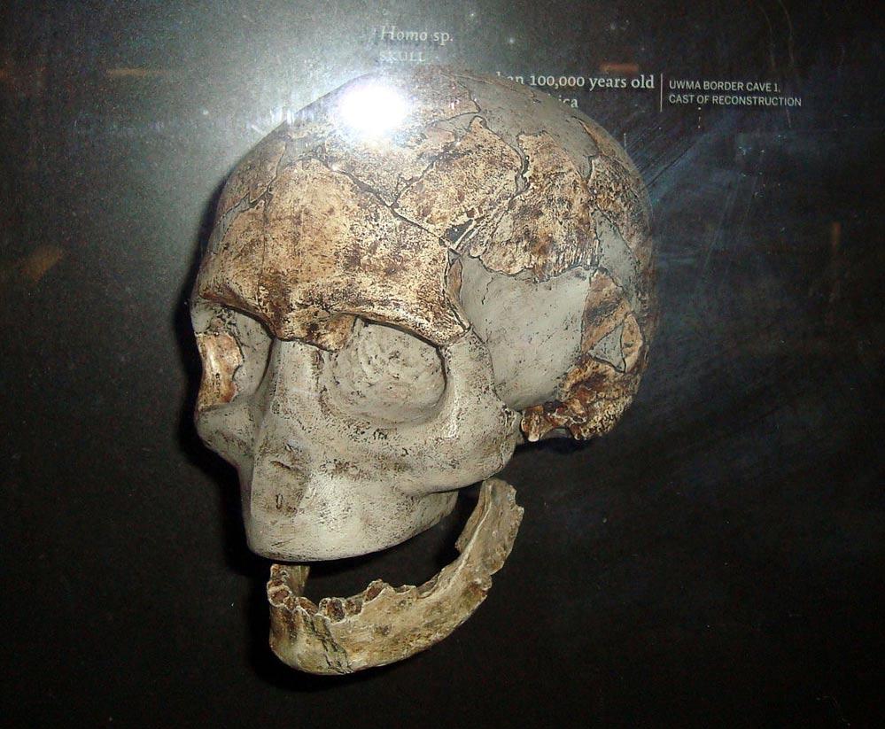 Cráneo reconstruido de un Homo Sapiens de hace unos 100.000 años hallado en una cueva de Sudáfrica. En el yacimiento de Libia, situado al norte de África, los investigadores han encontrado mandíbulas de hace unos 80.000 años. (Foto: Wapondaponda/Wikimedia Commons)