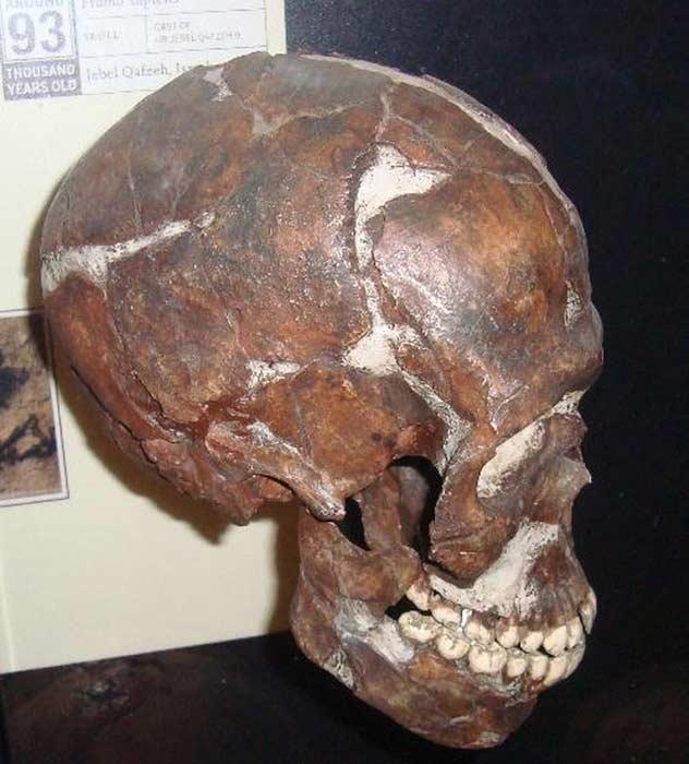 Cráneo de un niño discapacitado hallado en el sistema de cuevas de Qafzeh, localizado en Galilea, Israel. (Public domain)