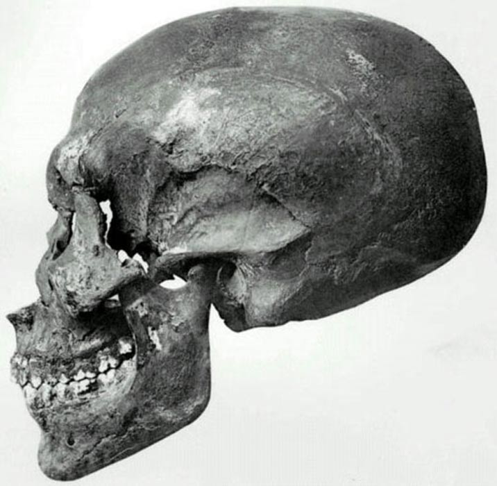 Perfil del cráneo hallado en la tumba KV55. Public Domain