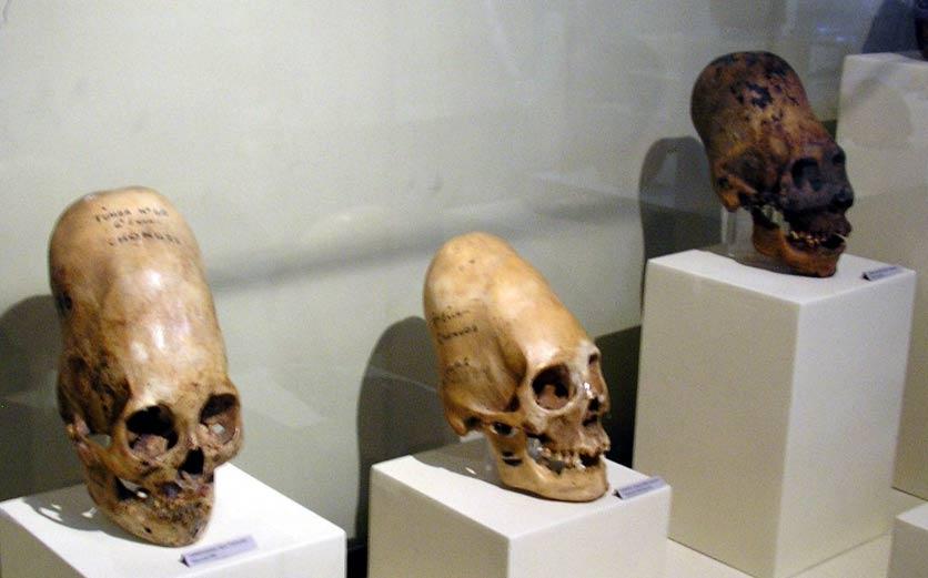 Cráneos elongados expuestos en el Museo Regional de Ica, Ica (Perú) (Public Domain)