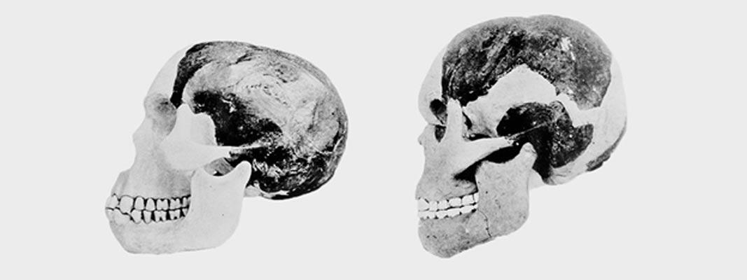 Cráneo y mandíbula del Hombre de Piltdown según las reconstrucciones del Dr. Arthur Smith Woodward (izquierda) y el profesor Arthur Keith (derecha). (Museo de Historia Natural, Londres)