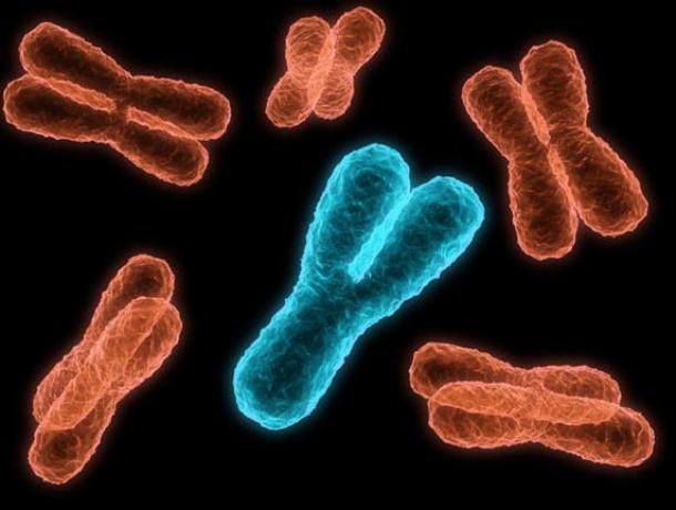 Esta mujer romana era morfológicamente femenina pero genéticamente masculina, ya que en su ADN había cromosomas tanto X como Y.
