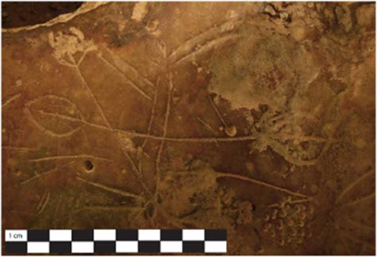 Cuadrúpedo con iconos en forma de remo grabados sobre su torso. (S. Murray)