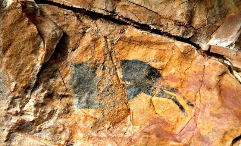 Primer plano de uno de los 13 jabalíes que protagonizan las pinturas rupestres recientemente descubiertas en Castellón. (Fotografía: Las Provincias/Europa Press)