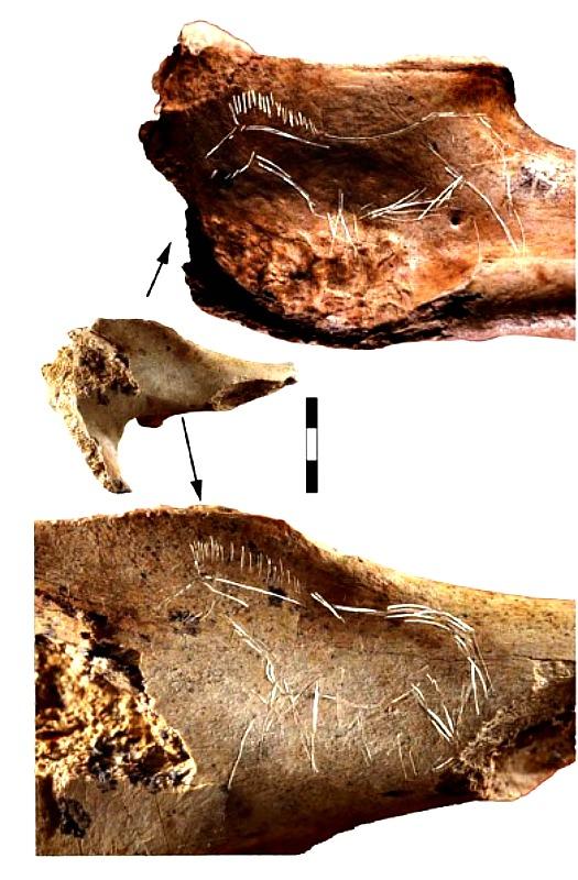 Fragmento de pelvis con función desconocida. Dos caballos completos, con trazas de una gran inexperiencia técnica, han sido grabados en ambas caras. (Fotografía: IIIPC/UNICAN)