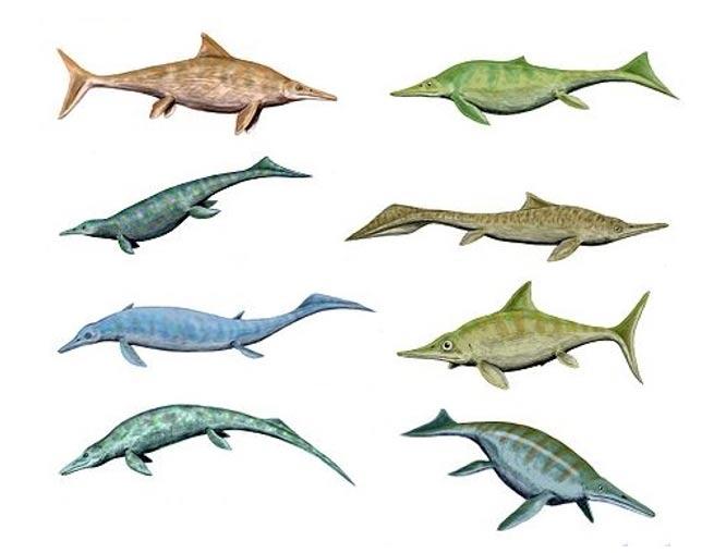 Todas las formas y tamaños posibles: ilustración que muestra la diversidad de los diferentes tipos de ictiosaurios (CC BY 3.0)