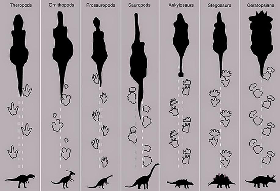 Algunas de las huellas de dinosaurios identificadas en Cal Orcko. (Imagen: La gaveta)