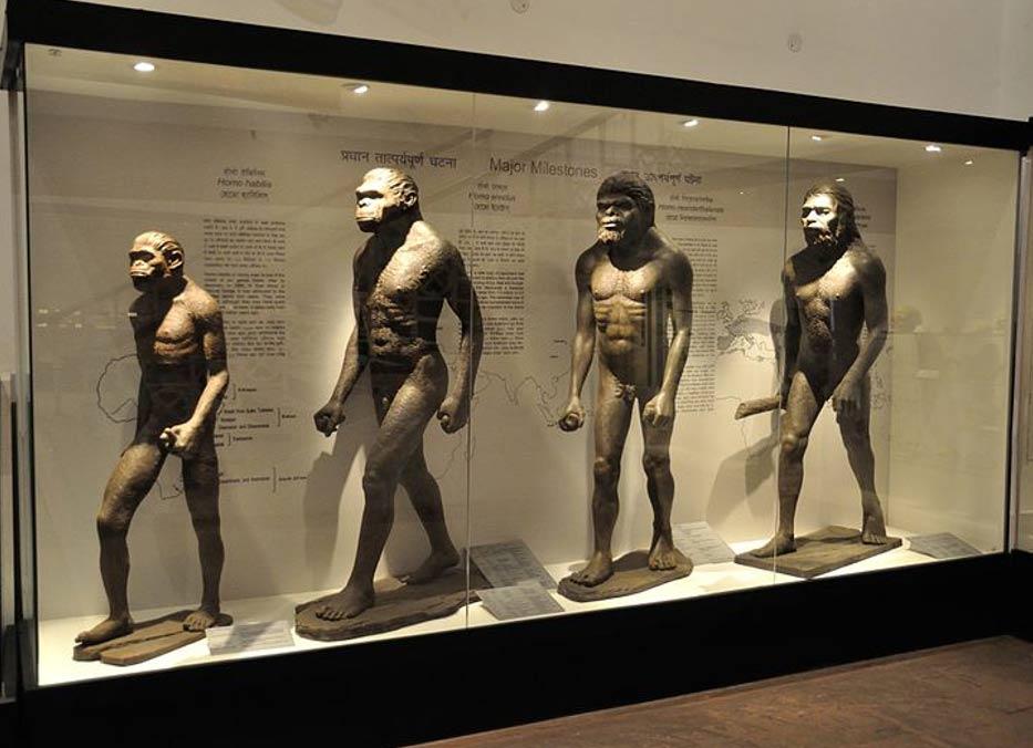 Diorama de la Evolución Humana, Calcuta, India. (Biswarup Ganguly/ CC BY 3.0)