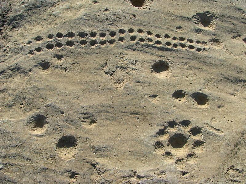 Arte rupestre y grabados en forma de puntos de Jebel Jassassiyeh (Qatar), datados aproximadamente en el 4000 a. C. (CC BY 2.0)