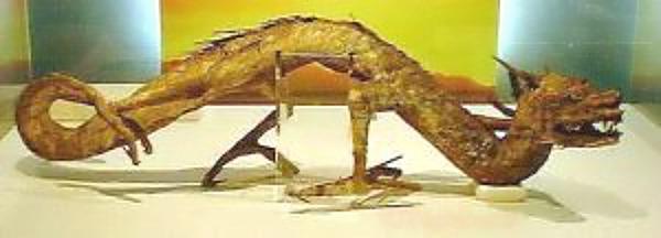 Pequeño loong embalsamado y expuesto en el Museo Zuiryuji de Osaka, Japón. (Fotografía: La Gran Época)