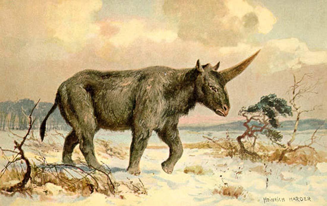 'Elasmotherium', ilustración de Heinrich Harder realizada en torno al año 1920. (Public Domain)
