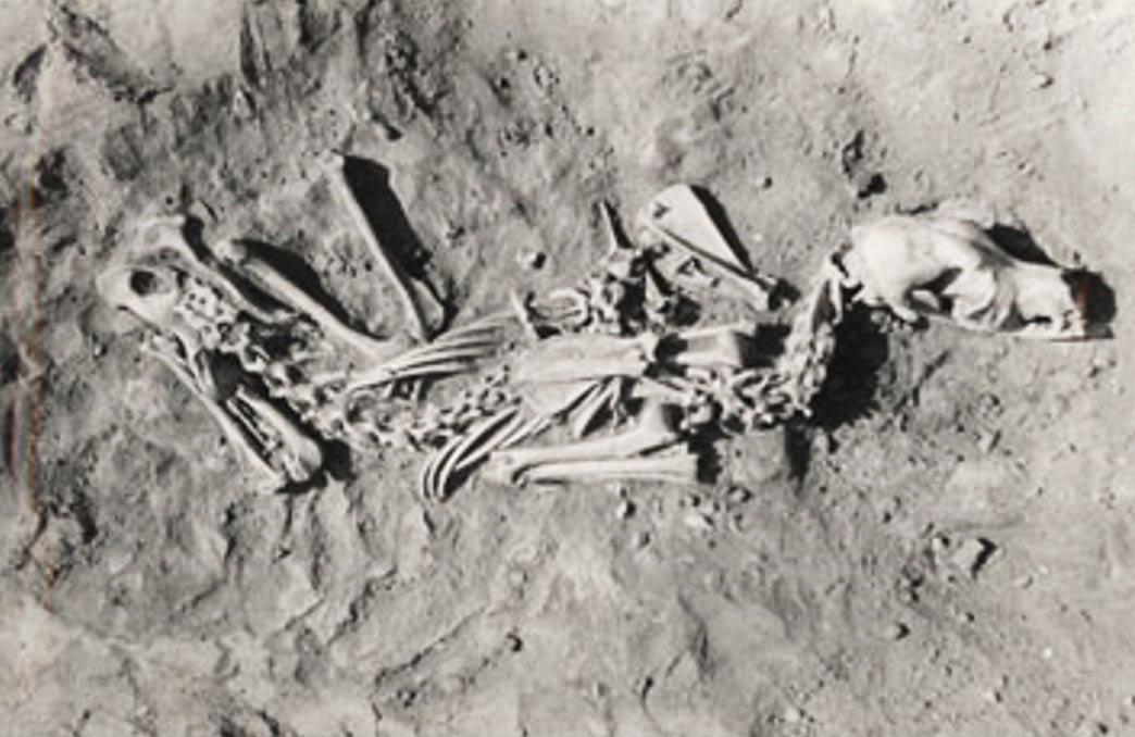 Enterramiento prehistórico de un perro. (Robert Losey)