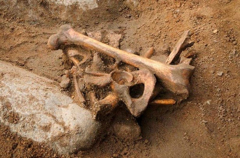 El esqueleto fue descubierto bajo la escuela primaria más antigua de la ciudad. Fotografía: City of Edinburgh Council