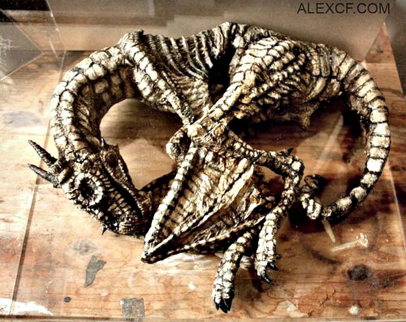 Supuesto ejemplar de cría de Draco Alatus (Dragón alado) (Fotografía: Merrylin Cryptid Museum)