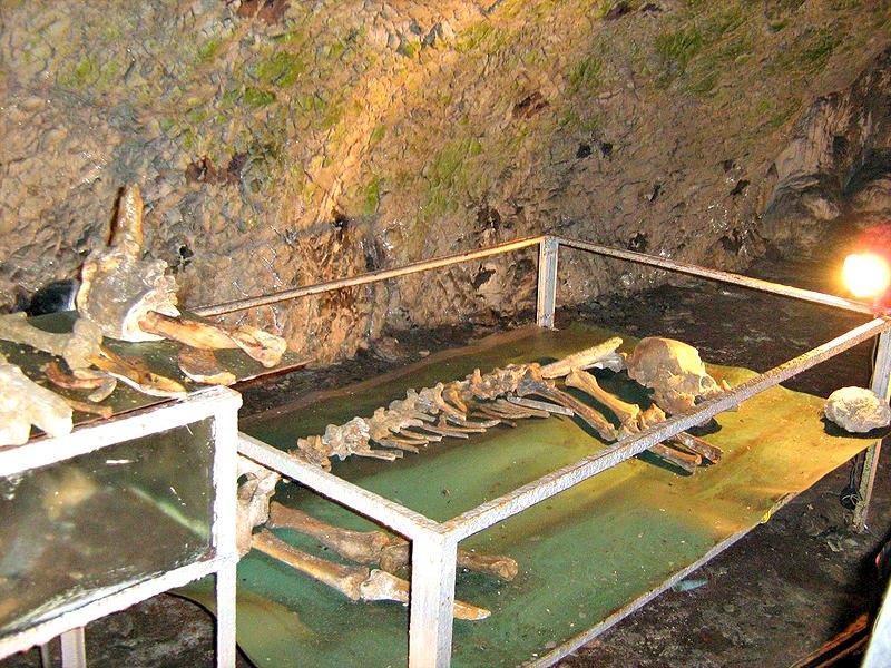 Restos óseos de antiguos osos de las cavernas hallados en la cueva rumana de Pestera Muierii (Public Domain)