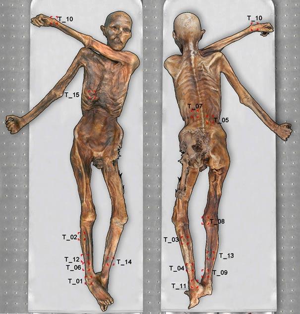 En el cuerpo del Hombre de Hielo se han identificado 61 tatuajes diferentes. (Museo arqueológico de Tirol del Sur)