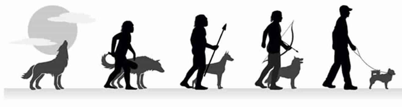 Del lobo al perro doméstico actual. (CC BY SA 4.0 )