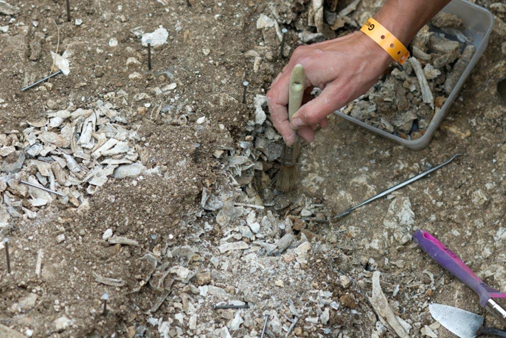 Excavaciones del año 2008 en Stonehenge. (Fotografía: Mike Pitts)