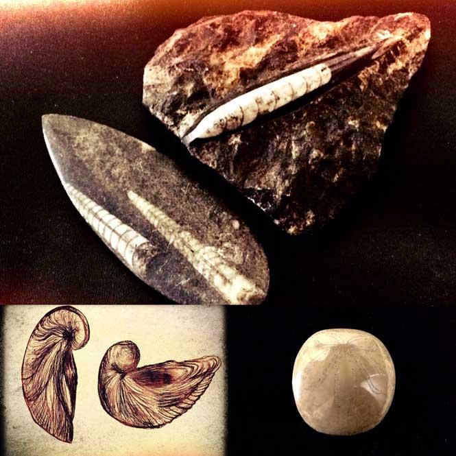 Fósiles utilizados con fines medicinales en Europa: belemnites, considerados rayos petrificados, pezuñas del diablo (conchas de gryphaea) y huevos (en realidad erizos de mar) (Legendz Collective)