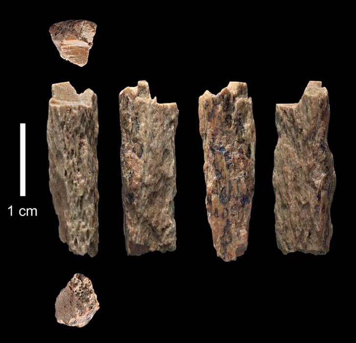 Este fragmento de hueso ('Denisova 11') fue descubierto por arqueólogos rusos en la cueva de Denísova (Rusia) en el año 2012 y perteneció a la hija de una madre Neandertal y un padre Denisovano. (T. Higham/ University of Oxford)