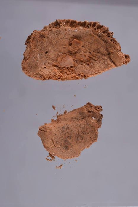 Fragmentos del cráneo hallado en el sarcófago de la tumba KV55 (Fotografía: AhramOnline)