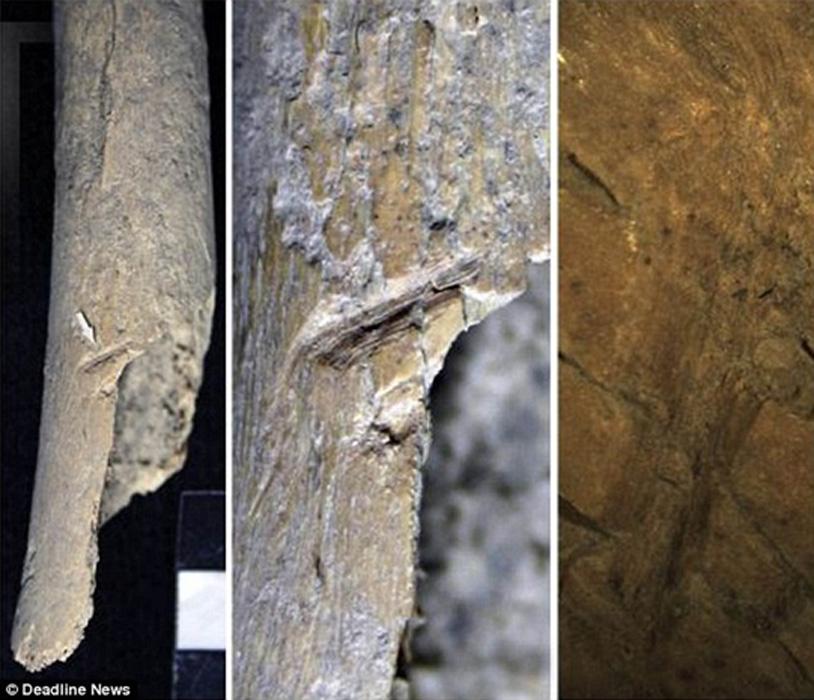 Los arqueólogos que han examinado los miles de fragmentos de huesos hallados en los yacimientos arqueológicos de las islas Orcadas han descubierto pruebas que sugieren que los cuerpos fueron despedazados y descarnados antes de ser enterrados. Fotografías: Deadline News.