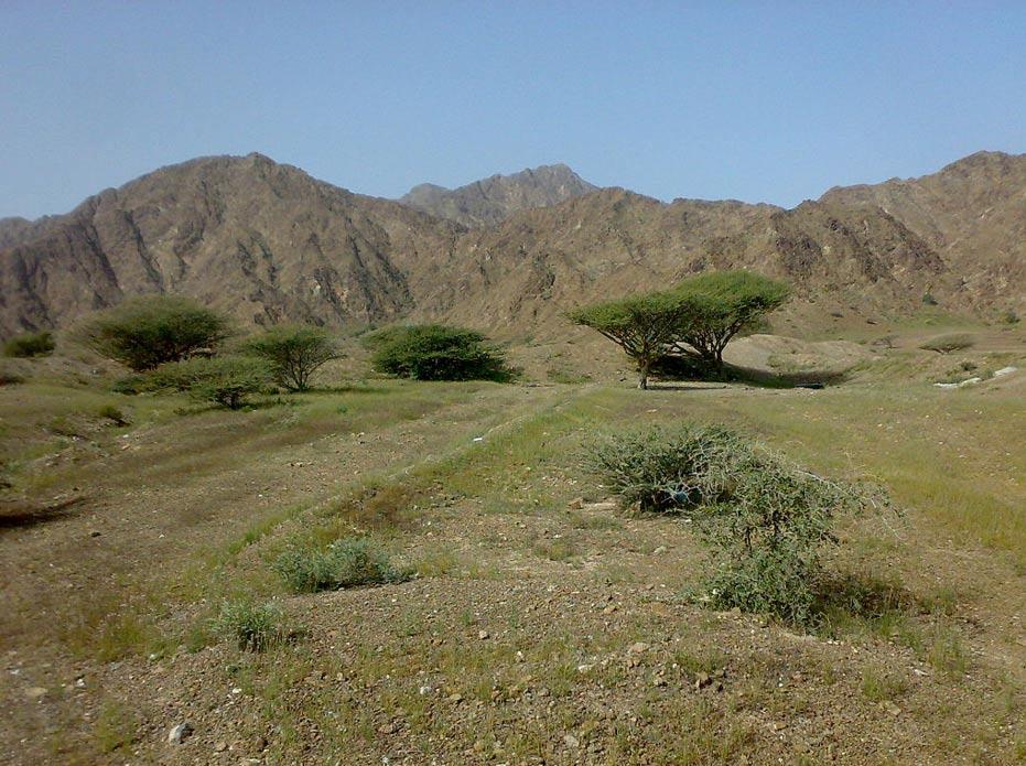 Vista de los montes de Fujairah (CC BY-SA 3.0)