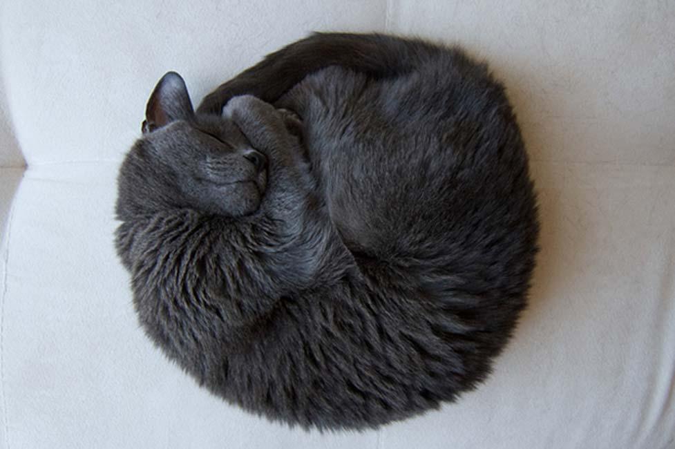 Gato durmiendo (CC BY-NC-SA 2.0)